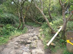 Camino de Santiago en el Monte Ulía